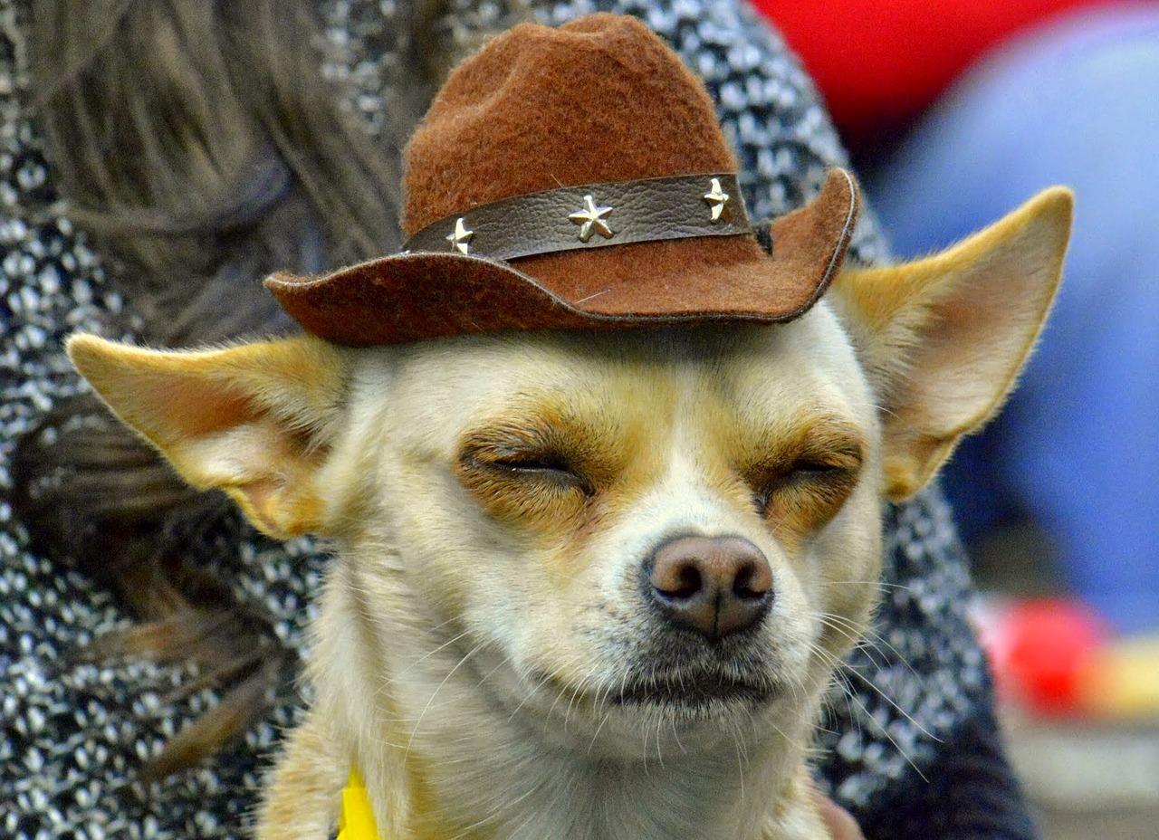 Psi a hudební festivaly - pro a proti
